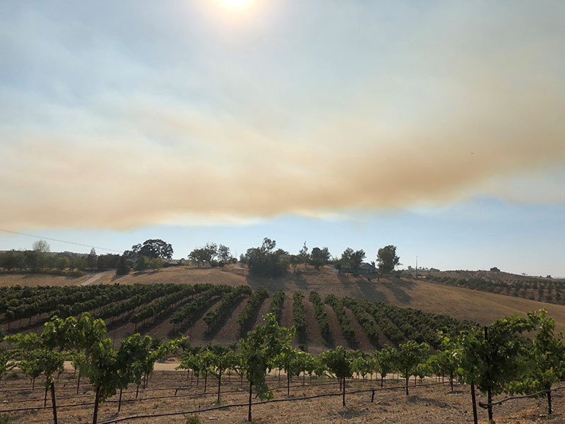 Nearby fire at the vineyard